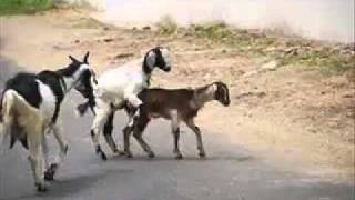 BAKRAMANDI SARAIKI funny clip   YouTube