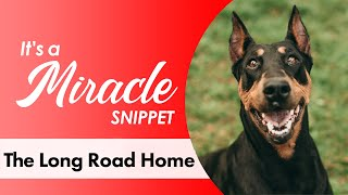 The Long Road Home - Miracle Dogs