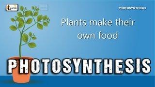 Photosynthesis | Photosynthesis in plants | Photosynthesis - Biology basics for children | elearnin