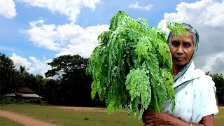 Delicious and Traditional Spinach Cooking by our granny | Unknown Village Food Factory
