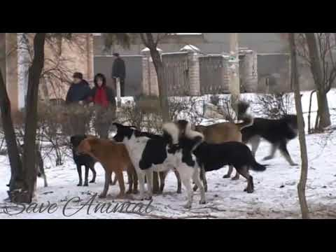 Xxx Mp4 Dog Mating And Fight Animal Sex Video Dog Sex 3gp Sex