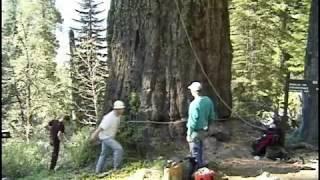 Climbing Oregon Caves 12' Fir Tree 1999