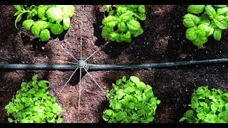 How to make a Low Cost Irrigation system for small & marginal farm