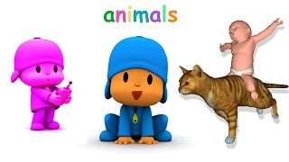 Baby Learn Animals With Pocoyo & Fun Animation Animals  For Children