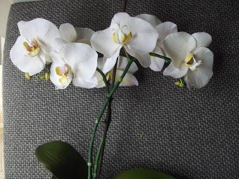 Орхидея фаленопсис мастер класс видео - Leo-stroy.ru