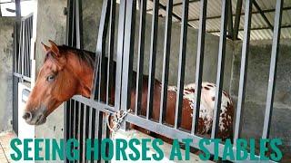 Kuda Poni, Kuda Raksasa dan Kuda Mandi