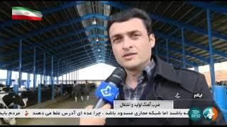 Iran Dairy farming & Milk production, Eyvan county پرورش گاو شيرده شهرستان ايوان ايران