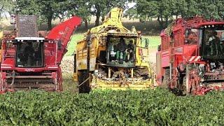 Rübenernte 2015 - Zuckerrüben roden - Rübenroder HOLMER, ROPA und Grimme - SUGAR BEET HARVESTING