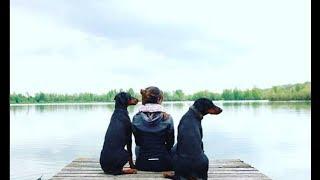 Le doberman en premier chien : Bonne ou mauvaise idée?