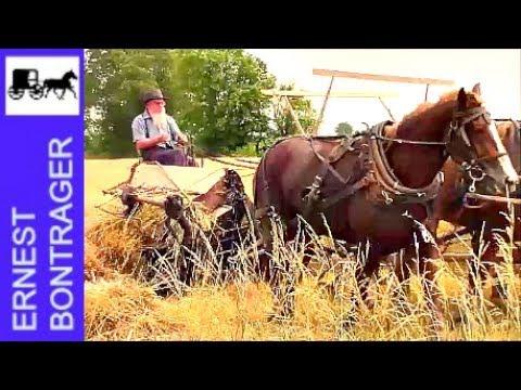 Xxx Mp4 Amish Farmer With 4 Horse Hitch Binding Wheat 3gp Sex