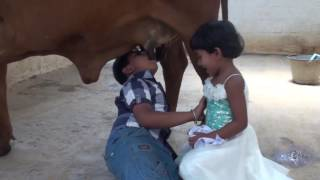 Kids drinking fresh milk from Indian cow breast