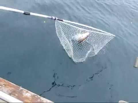 Pesca de barco aos besugos