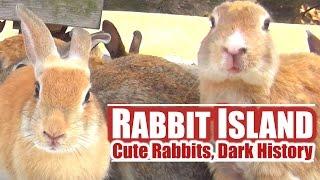 Japan's Rabbit Island: Cute Rabbits, Dark History