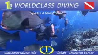 www.treasure-images.com - Borneo Divers Promotional Video 2010