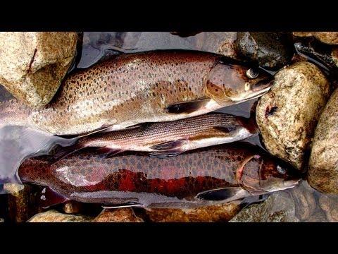 Рыбалка на ононе в забайкальском крае