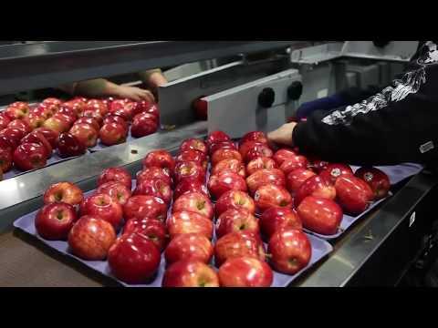 Xxx Mp4 Apple Processing In Shopian Kashmir 3gp Sex