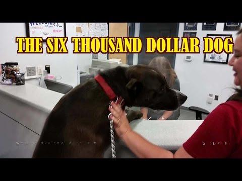 Xxx Mp4 The Six Thousand Dollar Dog 3gp Sex