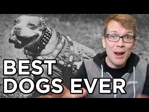 watch Top 10 Best Dogs Ever