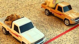 remote cars racing duck and chick سباق بين البطة والعصفور سيارة ريموت