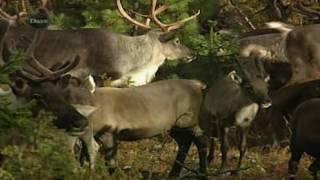 Ray Mears' World Of Survival   S01   E03   Siberia