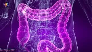 Powerful Stomach & Intestine Treatment Sound Therapy - Digestion Enhancement Binaural Beats #GV141