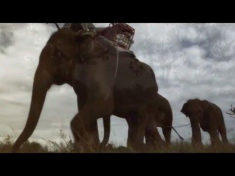 Xxx Mp4 Elephants Return To The Forest Thailand 3gp Sex