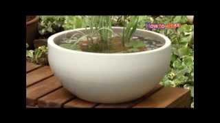 水生植物の楽しみ方【コメリHowtoなび】