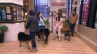 Andre Diam Seribu Bahasa Kedatangan Anjing Herder