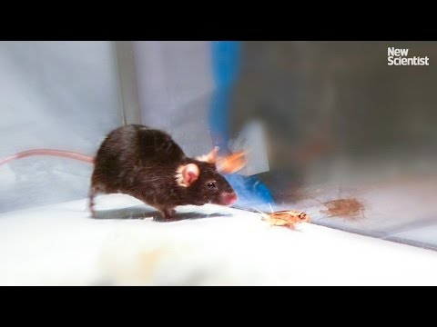 watch Mice made to kill using mind control lasers
