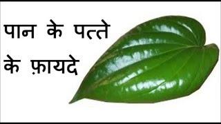 पान के पत्ते के फ़ायदे | Health benefits of Betel Leaves | Betel leaves benefits in Hindi