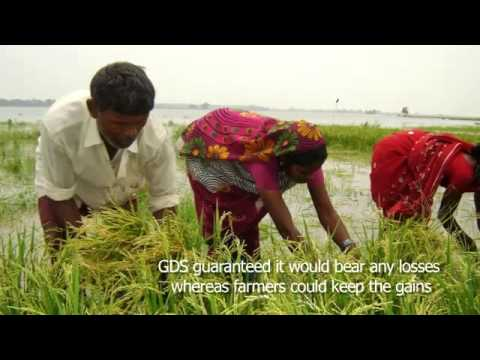 Stress Tolerant Varieties of Crops benefit the farmers in Disaster Prone area of Maharajganj