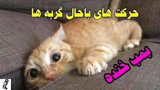 گربه های بانمک . امکان نداره بتونی نخندی Funny Cats