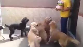 Dogs Disciplined by strict master