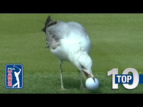 Top 10 Animal Encounters on the PGA TOUR