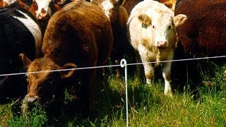 Check Your Electric Fence in 10 Easy Steps!