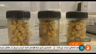 Iran made Corn processing factory, Yazd province كارخانه فرآوري ذرت شهرستان يزد ايران