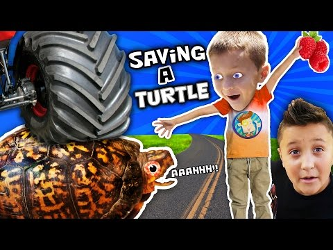 RAN OVER TURTLE 😩Eww Blood😠 Mom vs. Dead Snake Skin HAHAHA FUNnel Vision Pet Smart Habitat Vlog