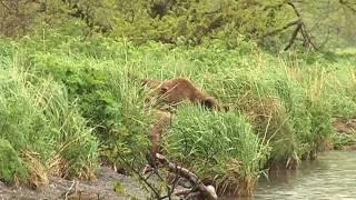 Медвежата в предвкушении рыбалки