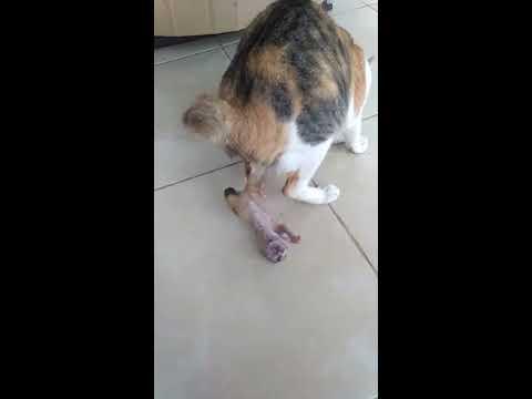 Xxx Mp4 Kucing Beranak 3gp Sex