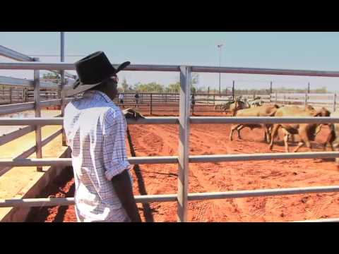 Livestock exports Official opening of the Broome cattleyards