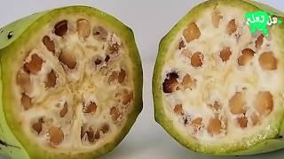 هذه الفاكهة لا يجب أن يكون لها وجود... لكنها موجودة!!