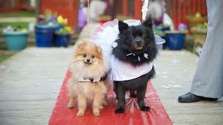 Cute Doggy Wedding