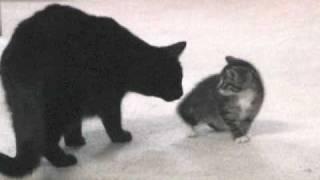 Madison Meets Carlita: Orphan kitten and adult cat