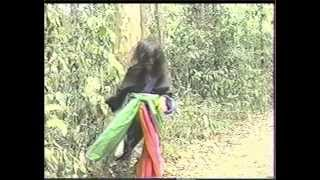 hmong old movie 95-96