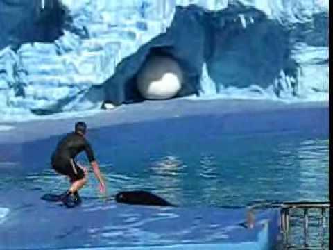 Mundo Marino Delfines y Orca Parte 2 de 3