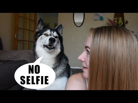 Xxx Mp4 Arguing With My Husky About Taking A Selfie 3gp Sex
