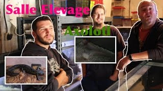 Visite d'une Salle d'élevage Axolotl et Urodèle soumise à certificat de capacité