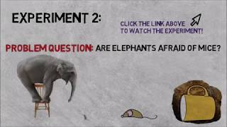 CLICK HERE! To continue to PART 3: MythBusters Independent/Dependent INTERACTIVE Video