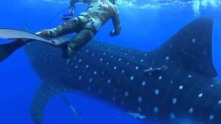 un chasseur se retrouve nez à nez avec un requin baleine lol