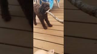 Doggo does a jump